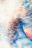 绘画,帆布,在帆布的油 pict的有选择性的片段 库存图片