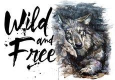 绘食肉动物的动物的狼水彩狂放和自由 免版税库存图片