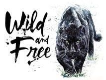 绘食肉动物的动物美洲狮捷豹汽车的豹水彩狂放&自由 免版税库存照片