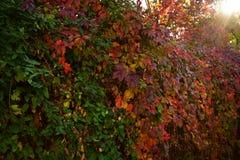 给催眠的秋天颜色 免版税库存图片