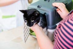 给狩医或猫客厅被带来的猫 库存照片