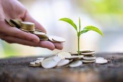 给硬币的手生长从堆的树硬币 生长在储款的植物铸造金钱 财务会计,投资 库存图片