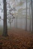 绝对雾 免版税图库摄影