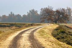 绞的农村路在清早 库存照片