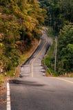 绞的山柏油路通过秋天森林 库存照片