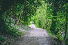 绞的森林供徒步旅行的小道绿色叶子 免版税库存图片