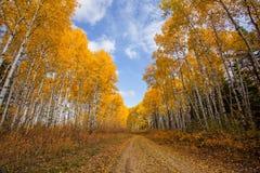 绞的足迹通过秋天森林 免版税库存图片