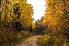绞的足迹通过秋天森林 库存图片