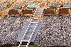 续订茅草屋顶 图库摄影