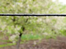 绳子在庭院用水在雨以后滴下 库存图片