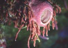 绳索海绵管 库存图片