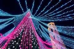 维尔纽斯,立陶宛- 12月03 :最美丽的圣诞树的夜视图在欧洲,从底部的射击 库存照片