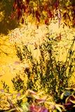 维洛树和河摘要 库存照片