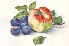 维生素苹果和李子,静物画 免版税库存照片