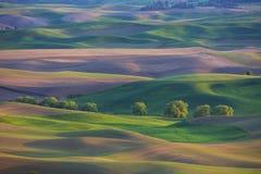 绵延山在华盛顿州的Palouse地区 库存图片
