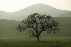 绵延山在春天在日落的 免版税库存图片