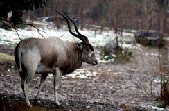 绵羊动物园 库存图片