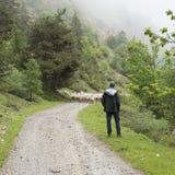 绵羊和牧羊人未铺砌的路的在国家公园des ecrins山在欧特普罗旺斯的法国阿尔卑斯 免版税库存照片
