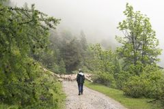 绵羊和牧羊人未铺砌的路的在国家公园des ecrins山在欧特普罗旺斯的法国阿尔卑斯 免版税图库摄影