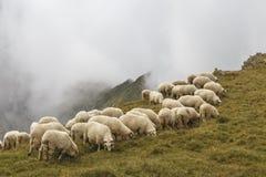 绵羊在山的,罗马尼亚夏天草甸成群 库存照片