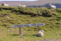 绵羊在表明转动的区域的标志旁边说谎在en 免版税库存图片