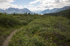 绵羊小河供徒步旅行的小道在Kluane国家公园,育空,能 免版税图库摄影