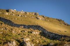 绵羊或山羊在山顶部 免版税图库摄影