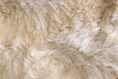 绵羊皮肤 免版税库存图片