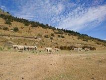 绵羊种田在与蓝天的高小山 免版税库存图片
