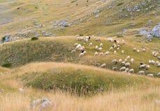 绵羊群在小山的倾斜的 免版税库存图片