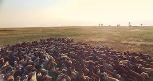 绵羊群空中寄生虫视图在乌克兰大草原干草原的 影视素材