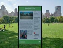 绵羊草甸在有人的中央公园 库存图片