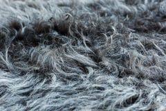绵羊` s羊毛 免版税库存图片
