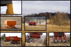 综合玉米收获 图库摄影