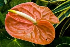 绽放五颜六色异乎寻常花卉 免版税库存照片