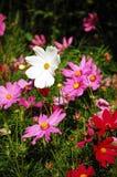 绽放五颜六色的野花 免版税库存照片