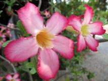 绽放植物的花园prag troja 图库摄影