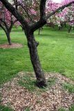 绽放结构树 免版税库存图片