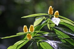 绽放花星期日热带黄色 图库摄影