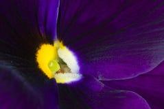 绽放花紫色 库存图片