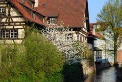 绽放esslingen庭院斯图加特 免版税图库摄影
