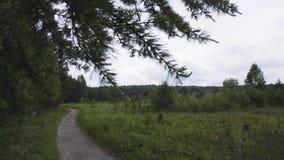 绿云杉枝在明云天背景下的特写,自然概念 库存素材 圣诞树 股票录像