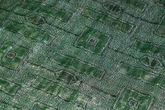 绿化丝绸 图库摄影