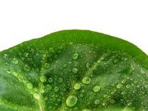 绿化半叶子 库存照片