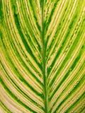 绿化叶子斑点 免版税图库摄影