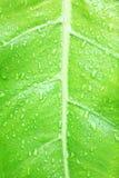 绿化叶子纹理背景 免版税图库摄影