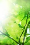 绿化叶子 库存图片