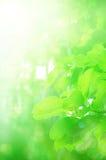 绿化叶子 库存照片