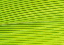 绿化叶子 免版税库存照片