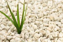 绿化叶子 免版税库存图片